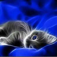KittyCatGamer309