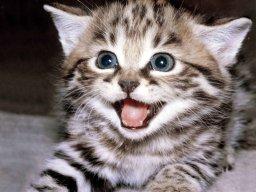 CattyKitty